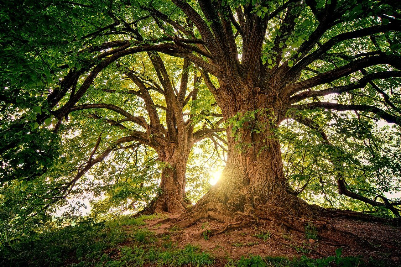 Tree - Wiccan Online Shop